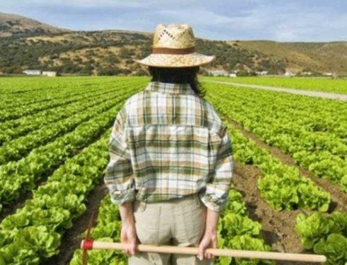 L'Imu agricola sulle spalle dei giovani imprenditori, l'Agia chiede un cambio di passo