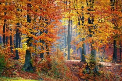 Adempimenti per le imprese boschive