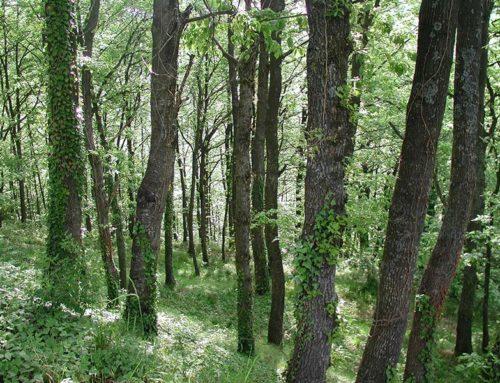 Toscana. 4 milioni dalla Regione per la valorizzazione delle foreste