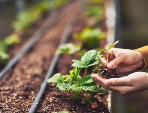Mipaaf. 4 milioni e 200 mila euro per la ricerca in agricoltura biologica, avviso pubblico in Gazzetta