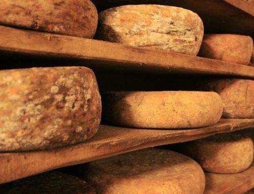 Ismea. Esportare formaggi stagionati in Giappone