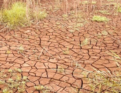 Giornata contro desertificazione. Cia: agricoltori in prima linea per il suolo