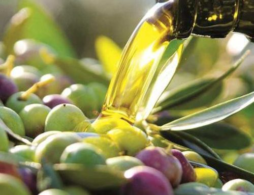 Concorso dell'olio extravergine del Montalbano. Premiazione sabato 18 gennaio