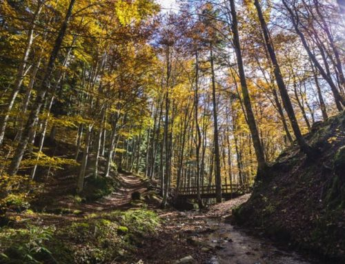 Strategia nazionale forestale. Successo della consultazione pubblica: circa 300 le osservazioni pervenute