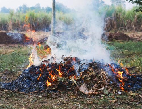 Abbruciamento di residui vegetali, è consentito fino al 30 giugno