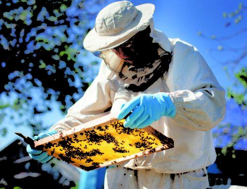 A Grosseto il 36° congresso nazionale dell'apicoltura professionale