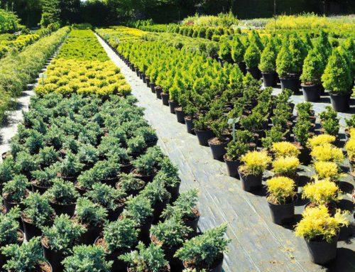 Furti nei vivai a Pistoia. 350mila piante trafugate nel 2019 per milioni di euro