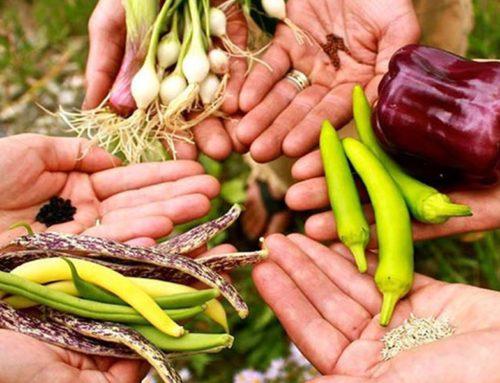 Biodiversità centrale per nutrizione globale entro 2050