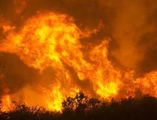 Incendio nell'azienda di Mara Longhin. Solidarietà Cia e Donne in Campo
