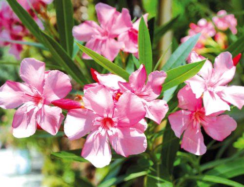 Xylella. Richiesta telematica ispezioni per spostamento di piante ospiti all'interno dell'Ue: scadenza 31 luglio 2020