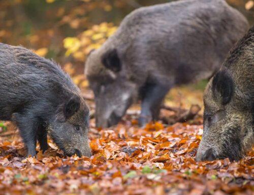 Fauna selvatica. Bellanova annuncia proposta per DL Semplificazioni
