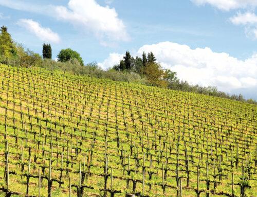 Viticoltura. Dal 15 febbraio le domande per nuovi vigneti in Toscana
