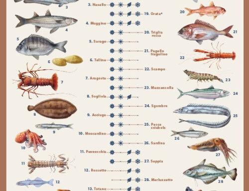 """Settore ittico. Al via campagna della Regione Toscana """"Un mare di pesci per ogni stagione"""""""