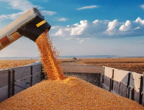 La filiera grano-pasta presenta il 28 ottobre i dati della campagna 2019/20
