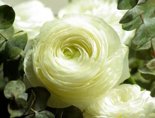 2 novembre. Cia: il mercato dei fiori punta sulla sostenibilità col ranuncolo. Cala l'export (-40%)