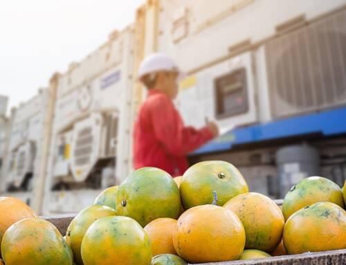 Covid. Cia: agricoltura +5,5% entro il 2023 grazie a export e Recovery Fund