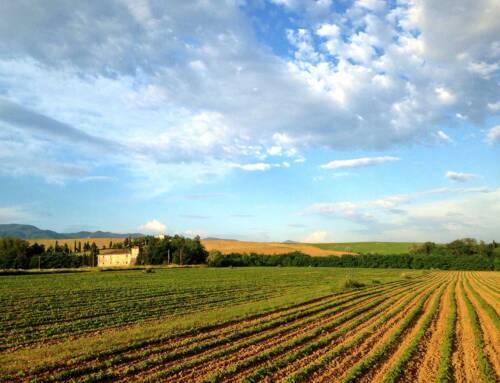 Agricoltura toscana. Saccardi: «Dall'Europa 312 milioni di risorse negli anni 2021-22»