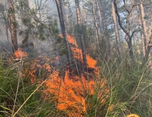 Incendio boschivo a Seggiano (Gr). Sul posto due elicotteri regionali