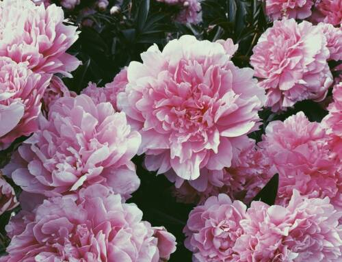 Festa della mamma. Bouquet in 1 famiglia su 3 e business da 35 milioni